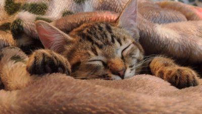 Похудение во сне: как запустить процесс