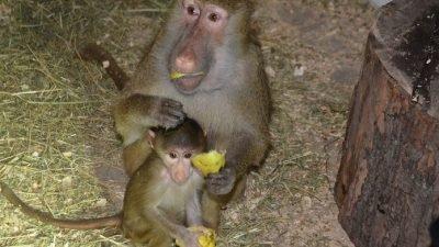зоопарк Маріуполя