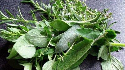 Пряні трави на вашій кухні, які покращують травлення