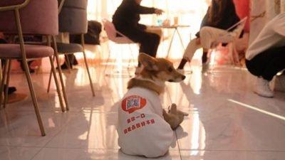 собаки-официанты