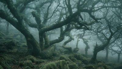 ліс в Англії