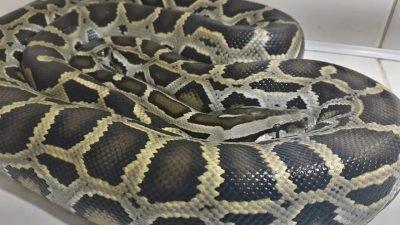 В Днепре врачи спасали жизнь змее (Фото)