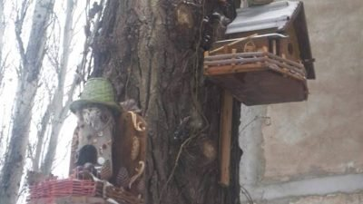 птица Кривой Рог домики