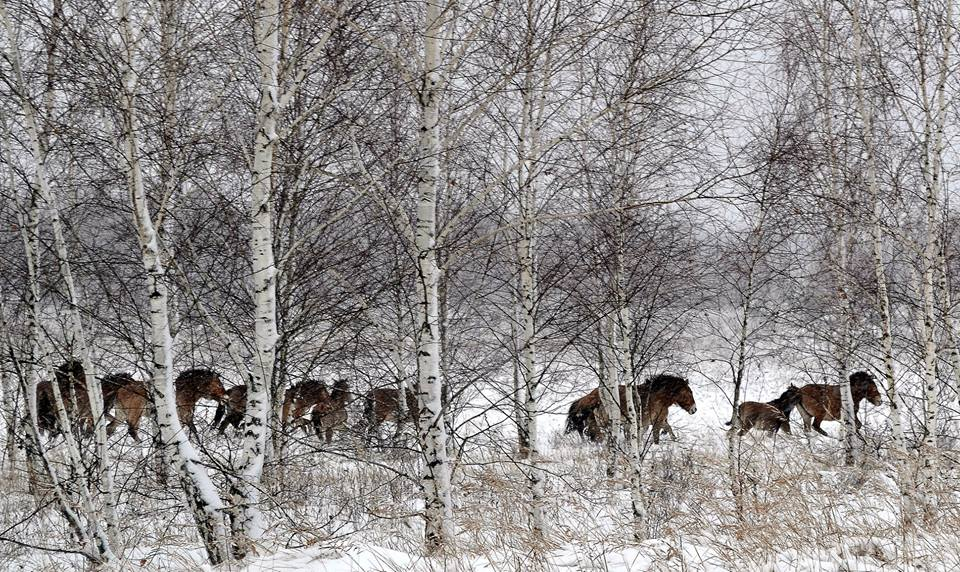 тварини_Чорнобиль