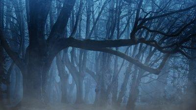 погода_туман Днепр