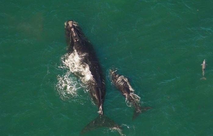 дитинча кита в Атлантичному океані