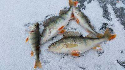 рыба зима рыбалка