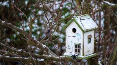 птахи_смертність_зима