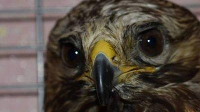 птицы Пегас