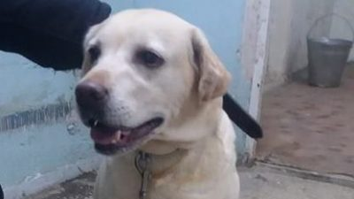 собака12 квартал Днепр