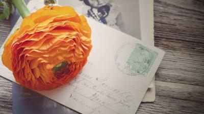 цветы и открытка