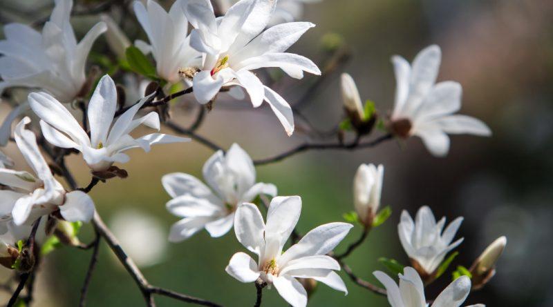 Цветок Закарпатье1