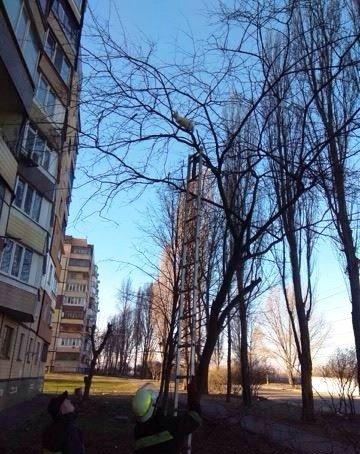 кіт на дереві_Кривий ріг