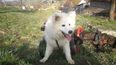 собака Тара_Днепр