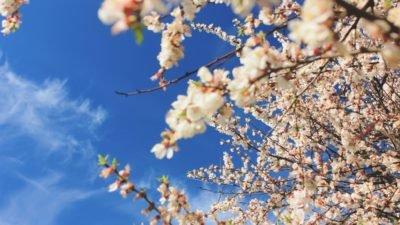 Погода у Дніпрі на 21 квітня