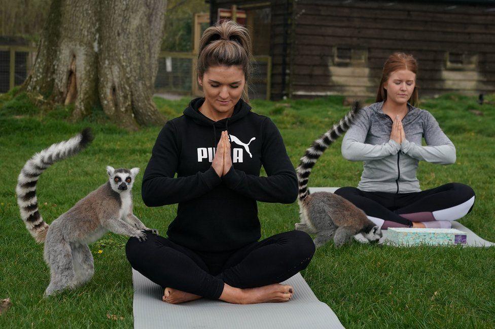 йога з лемурами