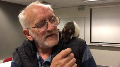 В Австралії поліція повернула безхатьку загубленого ручного щура