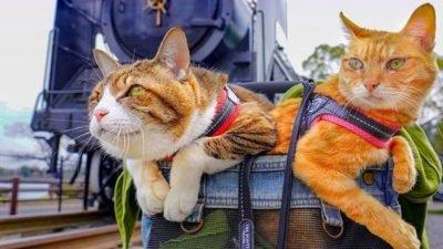 коти в рюкзаку_Японія