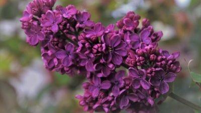 цветы весна Днепр