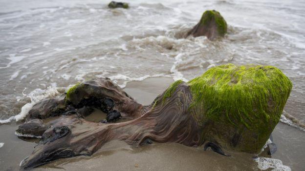 затонулий ліс