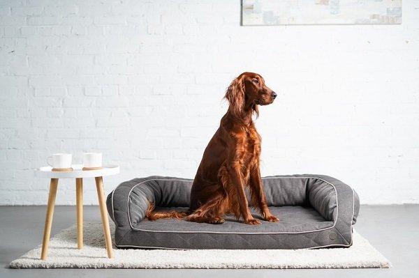 диван для собаки