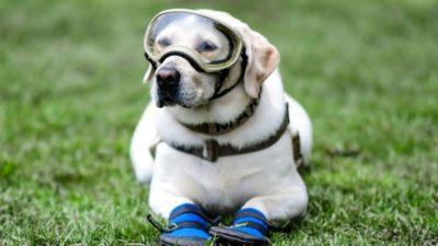 собака-рятувальниця Фріда