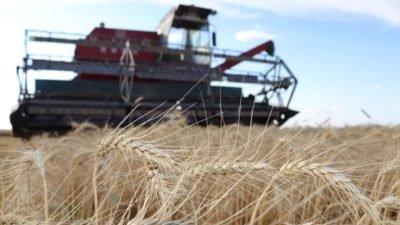 За 5 років експорт зернових з України в Китай збільшився у 20 разів