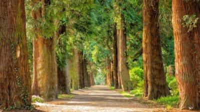 На одній з вулиць Дніпра планують видалити дерева