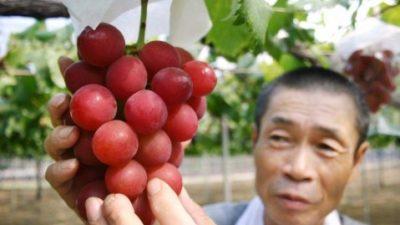гроздь винограда продали за рекордную сумму