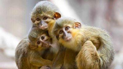 В Кении нашли окаменелости крошечной обезьяны возрастом 4 млн лет