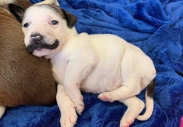 щенок похож на Сальвадора Дали