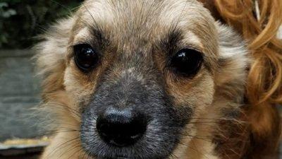 У Дніпрі пес залишився без своєї подруги (Фото)