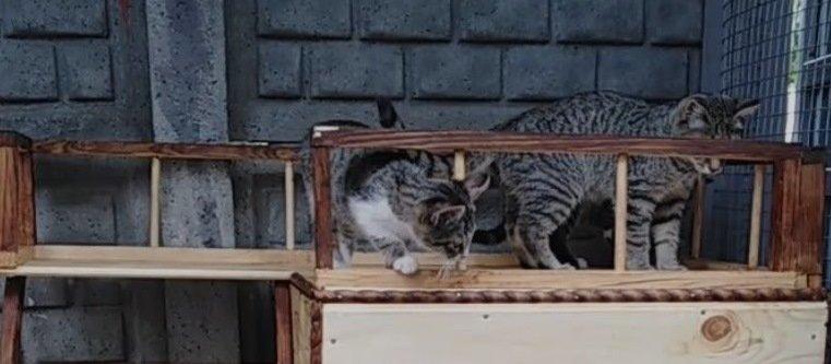забава коти