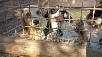 Наступают холода: животным Днепра нужна помощь