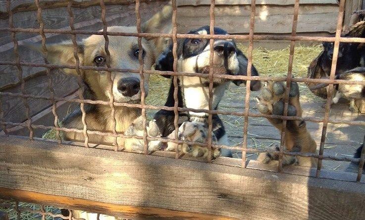Пегас животные собаки