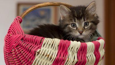 У Дніпрі біля багатоповерхівки залишили коробку з кошенятами (Фото)