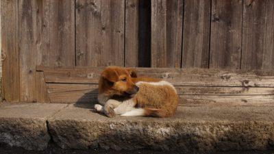 собаки улица бездомные