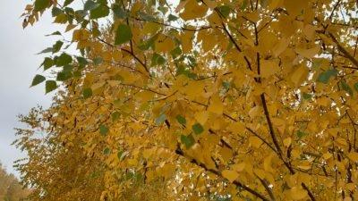 «Осенний Fest» на Черниговщине: полеты на самолете, экскурсии в храмы и леса