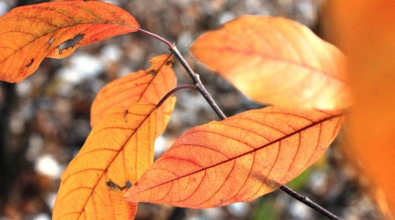 погода Днепра листья
