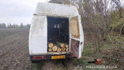 авто дерева Кривий Рыг