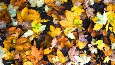 Погода у Дніпрі на 17 листопада