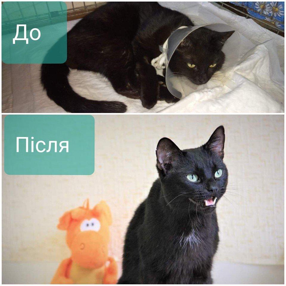 Фото до и после: в Днепре удалось спасти травмированную животное. Афиша Днепра.