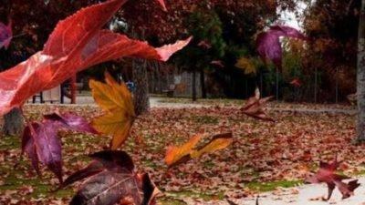 осень ветер погода