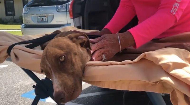 спасенная собака на Багамах