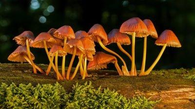 грибы pixabay