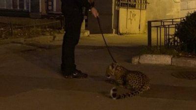 В центре Киева мужчина выгуливал на поводке леопарда