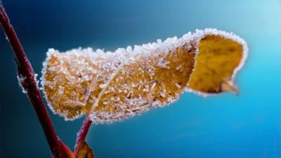 мороз осень