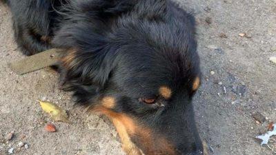 собака Каменское