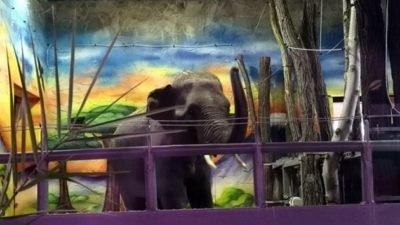 слони в Миколаївському зоопарку