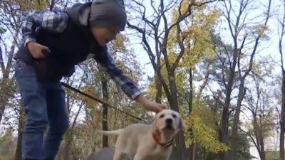 собака_Кропивницкий